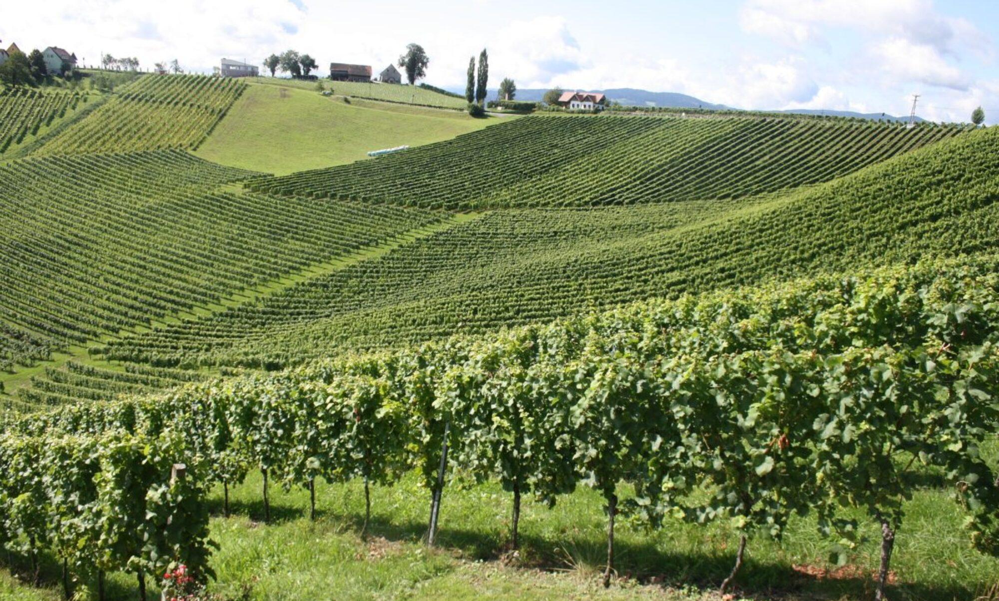 specialist in Oostenrijkse wijnen