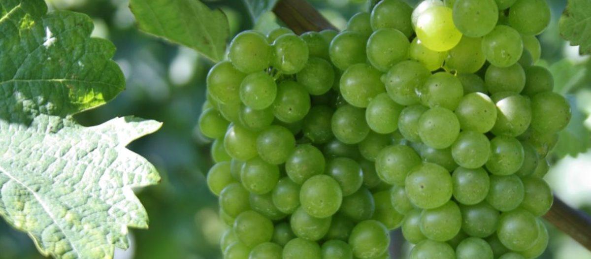 Wine Delight – Oostenrijkse wijnen